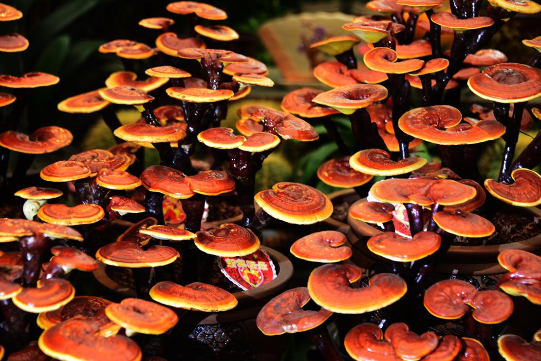 Polveri per gambe da un fungo