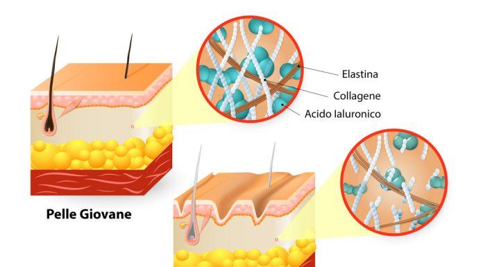 elastina che cose e come agisce questa proteina della pelle