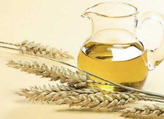 olio di germe di grano che cose proprieta e utilizzi