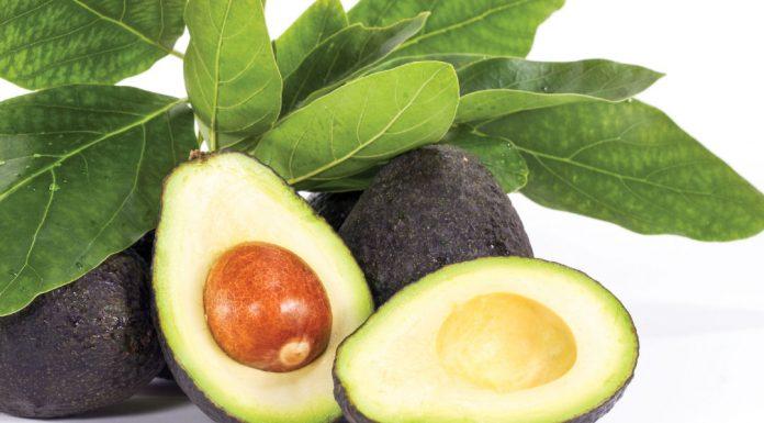Avocado: proprietà, benefici, calorie, utilizzi e controindicazioni