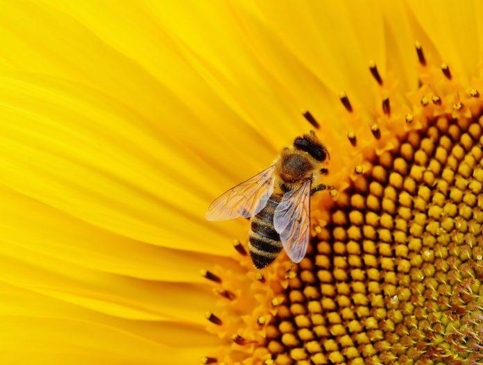 Veleno d'api: il siero dall'effetto botox presente nei cosmetici di alta qualità