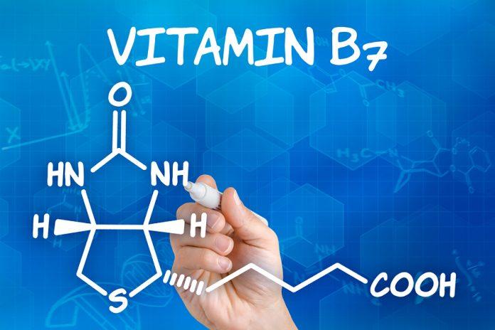 Vitamina H (Biotina o Vitamina B7): che cos'è, a cosa serve, in quali alimenti si trova e controindicazioni