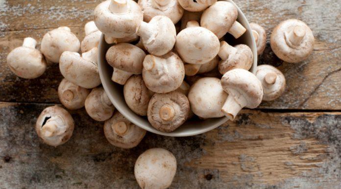 Funghi: proprietà, benefici, utilizzi e valori nutrizionali