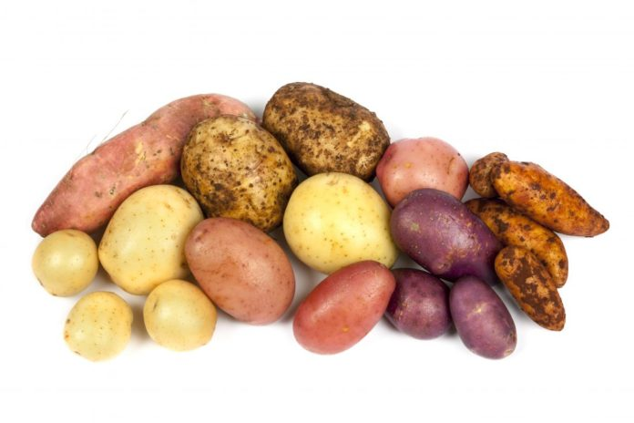 Patate: proprietà, benefici, utilizzi e valori nutrizionali