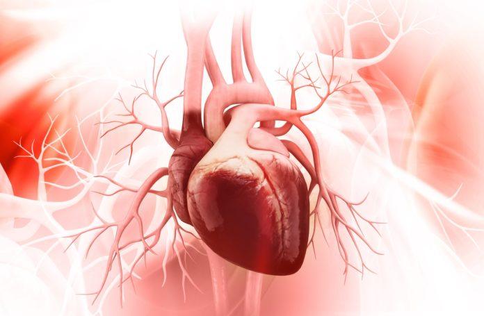 Tachicardia: che cos'è, sintomi, cause, diagnosi e possibili rimedi naturali