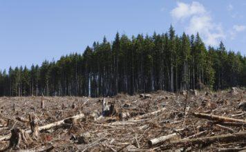 Olio di Palma: continua la deforestazione