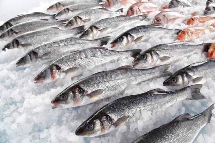 Pesce ricco di Mercurio: esposizione oltre i limiti di sicurezza