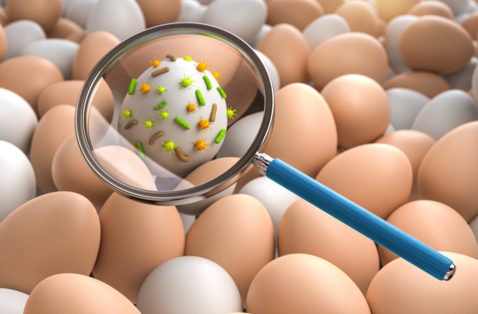 Salmonella: che cos'è, sintomi, cause e possibili cure