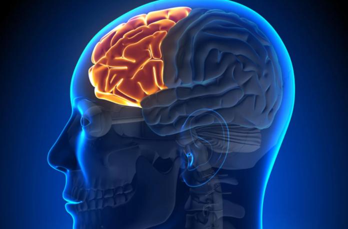 Lobotomia: che cos'è, cause, diagnosi e possibili cure