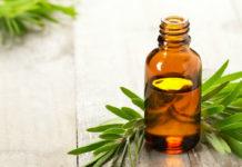 Olio essenziale di Tea Tree: che cos'è, proprietà, utilizzi e controindicazioni