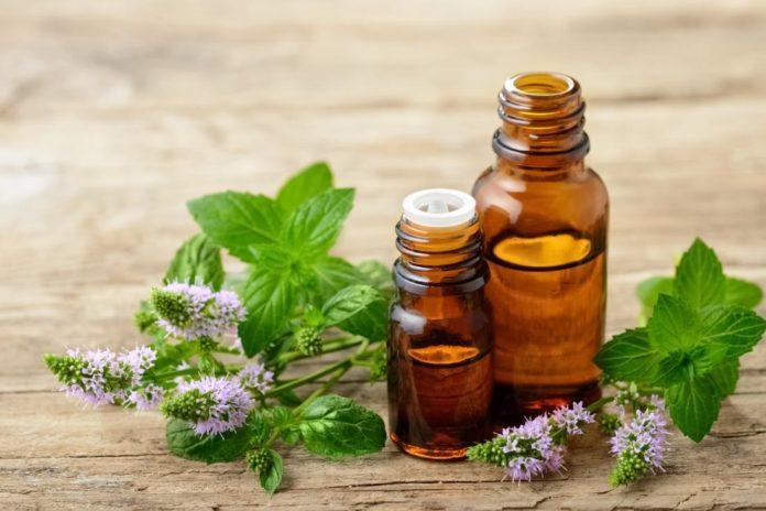 Olio essenziale di Timo Rosso: proprietà, utilizzi e controindicazioni