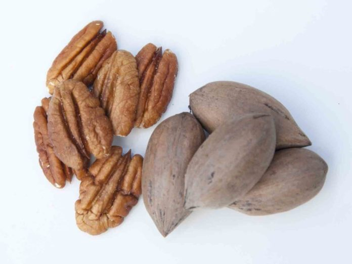 Noci Pecan: cosa sono, proprietà, benefici, valori nutrizionali e controindicazioni