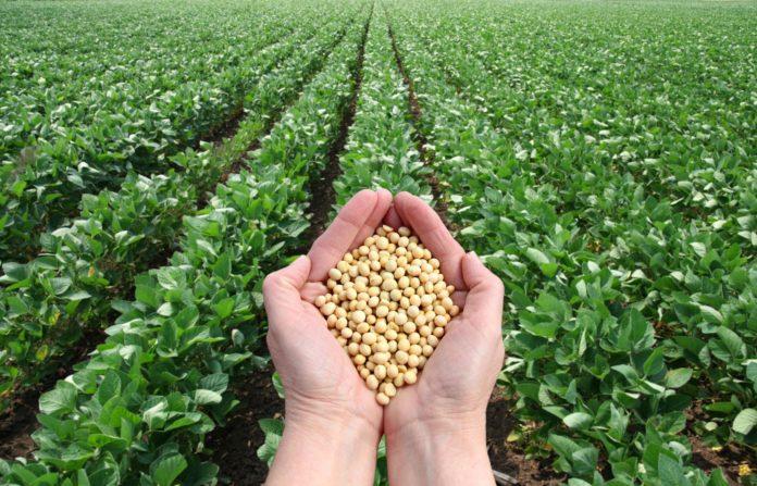 Enzimi Vegetali: cosa sono, dove si trovano, benefici e controindicazioni