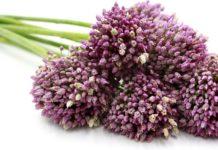 Garlic: che cos'è, proprietà, benefici, utilizzi e controindicazioni