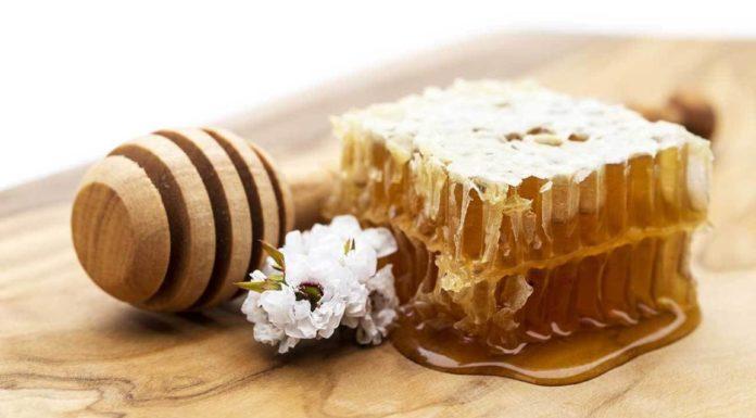 Miele di manuka: che cos'è, proprietà, valori nutrizionali, utilizzi e controindicazioni
