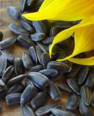 Semi di Girasole: che cos'è, proprietà, benefici e utilizzi in cucina