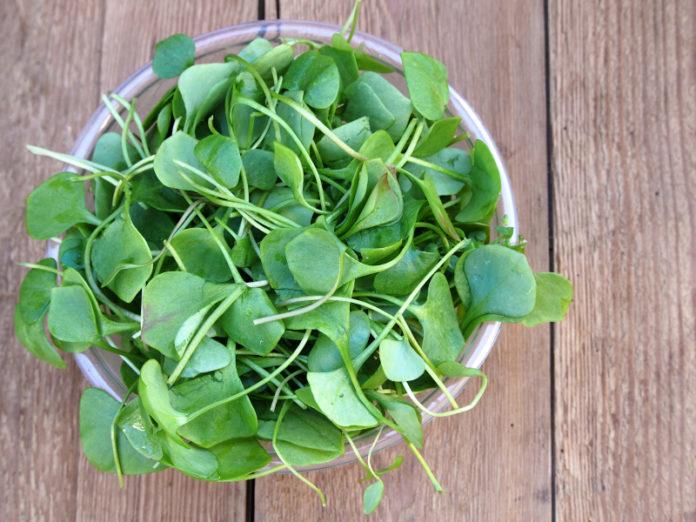Crescione: che cos'è, proprietà, utilizzi e valori nutrizionali