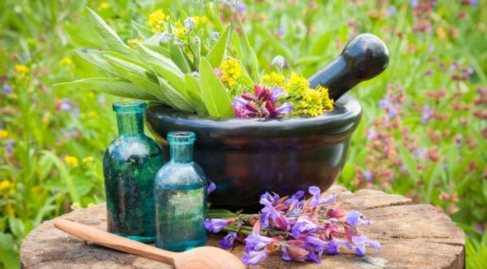 Floriterapia: che cos'è, a cosa serve, come funziona e controindicazioni