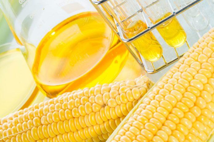 Olio di Mais: che cos'è, proprietà, benefici ed utilizzi