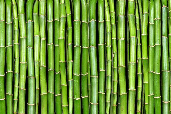 Bambù: che cos'è, proprietà e a cosa serve