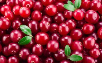 Cranberry: che cos'è, benefici, utilizzi, proprietà e controindicazioni