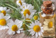 Olio essenziale di Camomilla: che cos'è, proprietà, utilizzi e controindicazioni