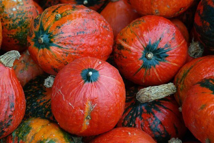 Zucca di Hokkaido: che cos'è, proprietà, benefici, valori nutrizionali e utilizzi
