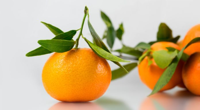 Mandarino: che cos'è, proprietà, benefici, valori nutrizionali, tipologie ed utilizzi