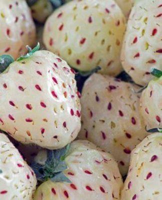 Pineberry: che cos'è, proprietà, benefici, valori nutrizionali e controindicazioni