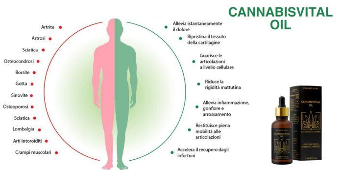 Cannabisvital Oil: olio alla Canapa con effetto Antidolorifico, funziona davvero? Recensioni, opinioni e dove comprarlo