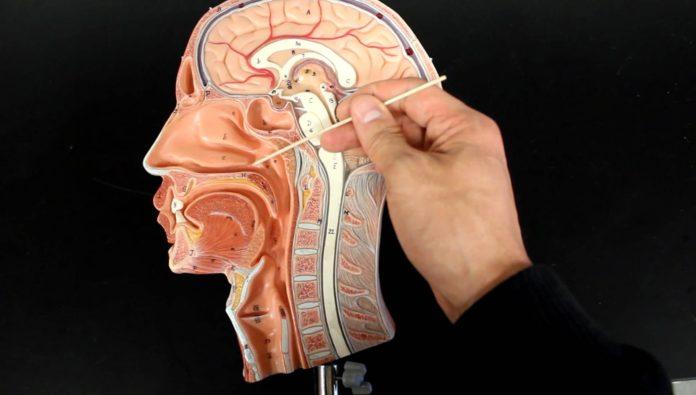 Glottide: che cos'è, cause, sintomi e diagnosi