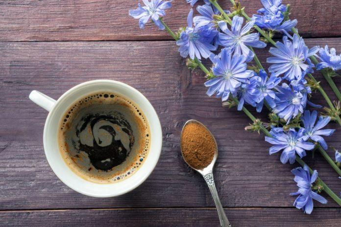Caffè di Cicoria: che cos'è, proprietà, valori nutrizionali, utilizzi e controindicazioni