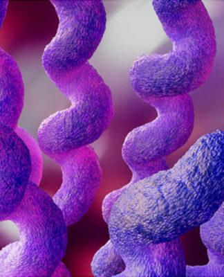 Campylobacter: che cos'è, cause, sintomi, diagnosi e possibili cure
