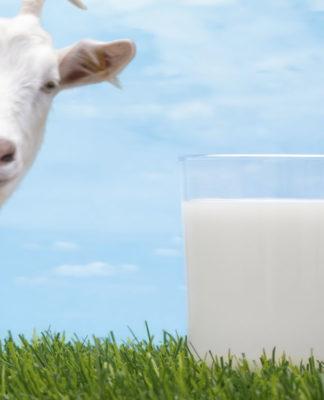 Latte di Capra: che cos'è, proprietà, benefici e controindicazioni