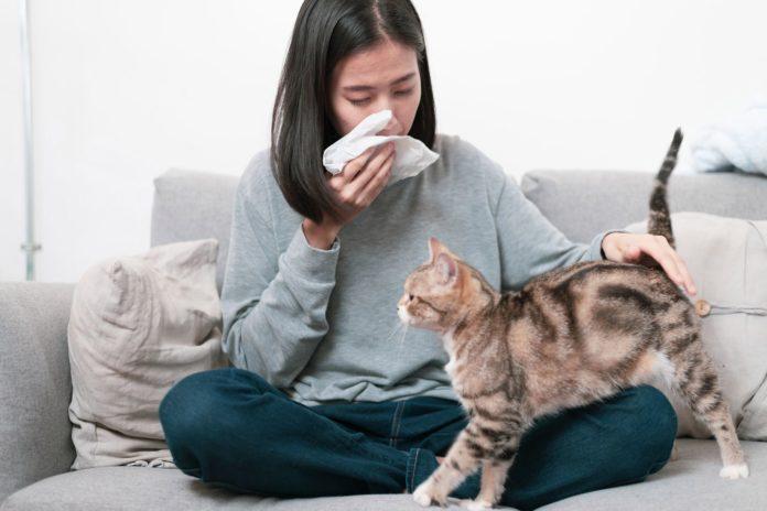 Allergia agli animali domestici: che cos'è, cause, sintomi, diagnosi e possibili cure